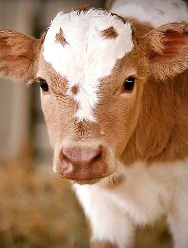 The importance of colostrum
