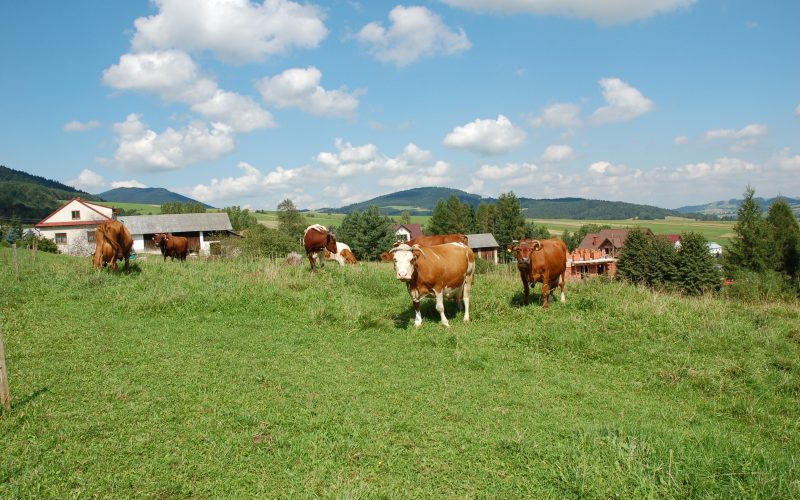 Pasture tetany